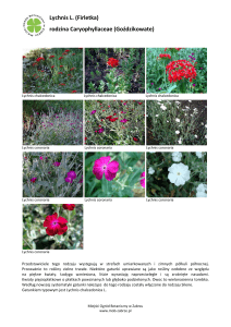 Lychnis L. (Firletka) rodzina Caryophyllaceae
